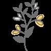 פרח 9